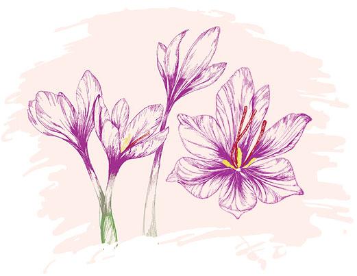 استفاده از گل زعفران در طراحی بسته بندی